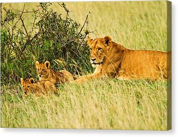 Lion Family Canvas Print by Kongsak Sumano