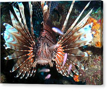 Canvas Print featuring the photograph Lion Fish - En Garde by Amy McDaniel