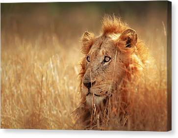 Lion In Grass Canvas Print by Johan Swanepoel