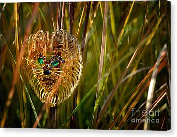 Lion In The Grass Canvas Print by Amy Cicconi