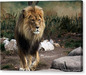Lion King Canvas Print by Ramabhadran Thirupattur