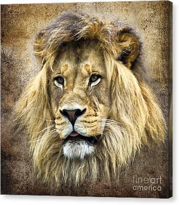 Lion King Canvas Print by Steve McKinzie