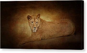 Lion Lady Canvas Print by Heike Hultsch