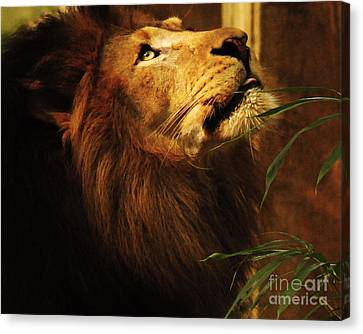 Canvas Print featuring the photograph The Lion Of Judah by Olivia Hardwicke