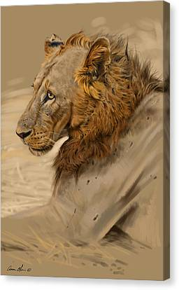 African Drawings Canvas Print - Lion Portrait by Aaron Blaise