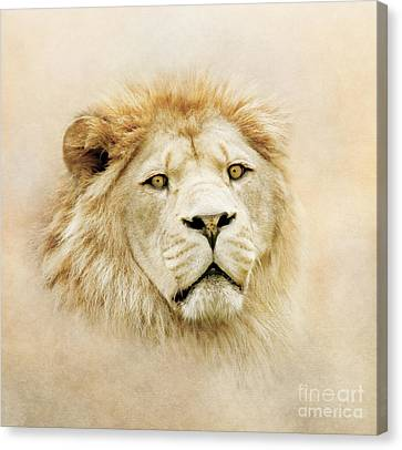 Canvas Print featuring the photograph Lion Portrait by Roy  McPeak