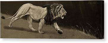 Lion Sketch Canvas Print