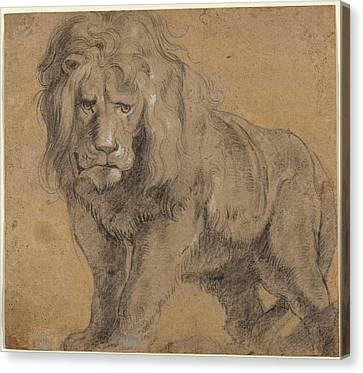 Lion Sketch Canvas Print by Paul Ruebens