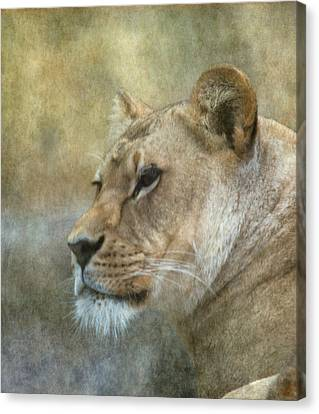 Lioness Canvas Print - Lioness by Angie Vogel