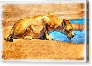 Lioness Drinking Canvas Print by George Rossidis