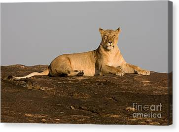 Canvas Print featuring the photograph Commanding View by Chris Scroggins