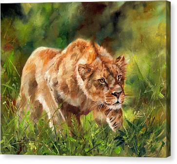 Lioness Stalking Canvas Print by David Stribbling