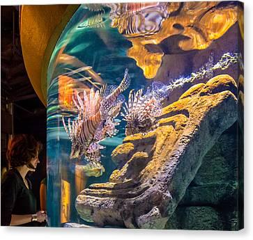 Lionfish Display Canvas Print by Steve Harrington