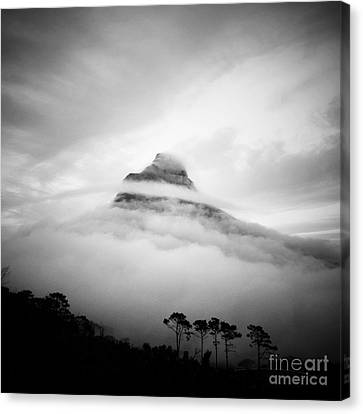 Lions Head Canvas Print by Neil Overy