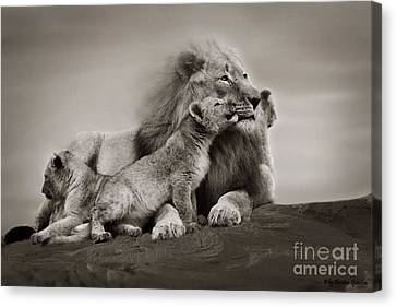 Canvas Print featuring the photograph Lions In Freedom by Christine Sponchia