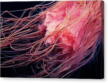 Lion's Mane Jellyfish Tentacles Canvas Print by Alexander Semenov