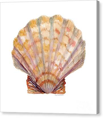 Seashell Canvas Print - Lion's Paw Shell by Amy Kirkpatrick