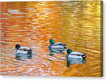 Canvas Print featuring the photograph Liquid Autumn by Carl Amoth