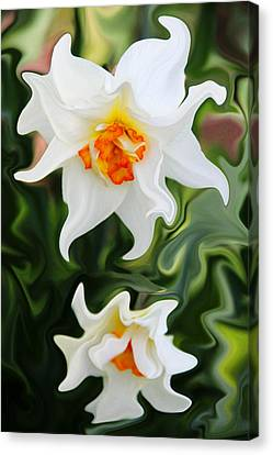 Liquid Narcissus Canvas Print by Mary Burr