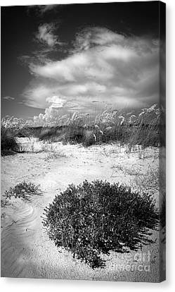 Sea Weed Canvas Print - Listen To The Slience by Marvin Spates
