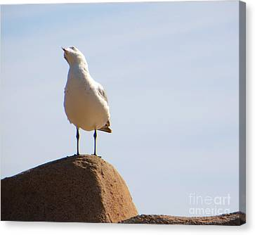 Canvas Print featuring the photograph Listen-up by Joy Hardee