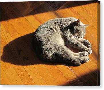 Lit Lounging Lucy Canvas Print by Guy Ricketts