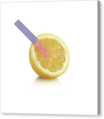Litmus Paper Test On A Lemon Canvas Print by Science Photo Library