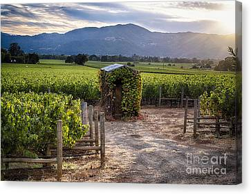 Little Shed In The Vineyard Canvas Print by George Oze