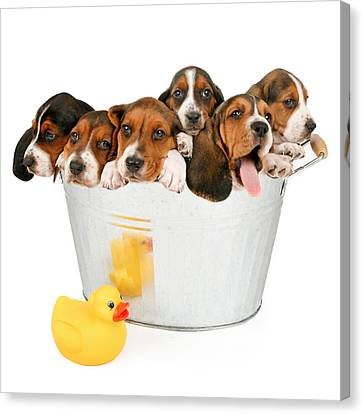 Litter Of Puppies In A Bathtub Canvas Print by Susan Schmitz