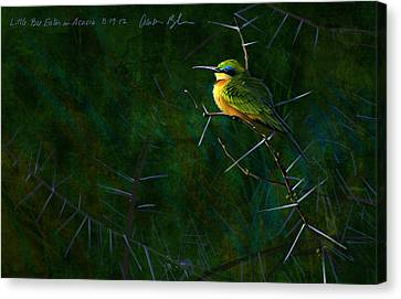 African Canvas Print - Little Bee Eater by Aaron Blaise