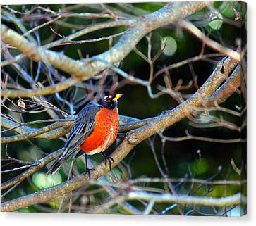 Little Bird Canvas Print by Carolyn Ricks