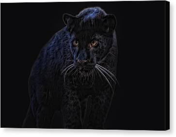 little black Jag Canvas Print
