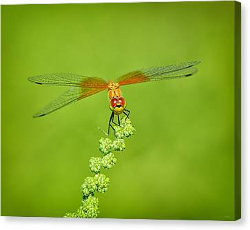 Canvas Print featuring the photograph Little Bugger by Greg Norrell