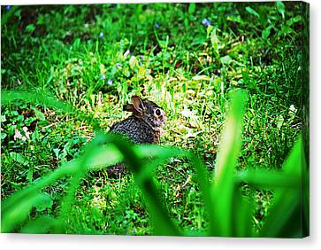 Little Bunny Fufu Canvas Print by Mark Russell