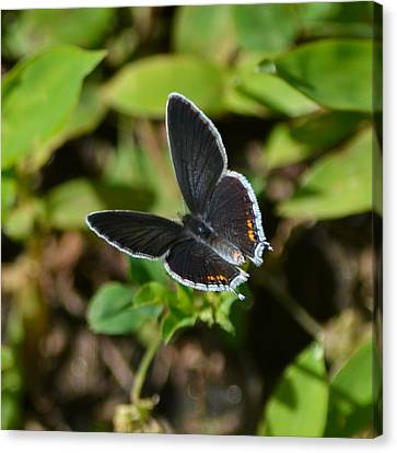Little Butterfly At My Feet Canvas Print