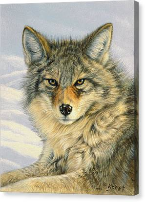 Little Coyote Canvas Print by Paul Krapf