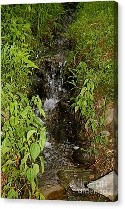 Little Creek Waterfall Canvas Print