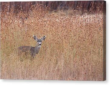 Little Deer Canvas Print by Ruth Jolly
