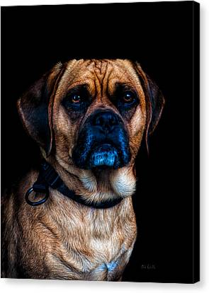 Little Dog Big Heart Canvas Print by Bob Orsillo