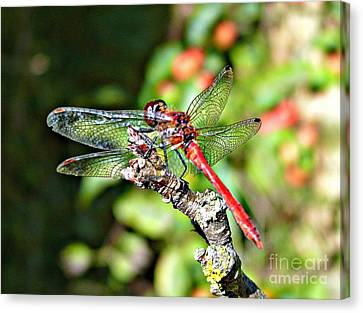Little Dragonfly Canvas Print by Morag Bates