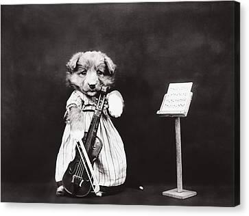 Little Fiddler Canvas Print by Aged Pixel