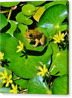 Little Frog Canvas Print by Werner Lehmann