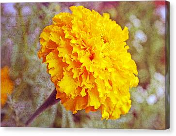 Canvas Print featuring the photograph Little Golden  Marigold by Kay Novy