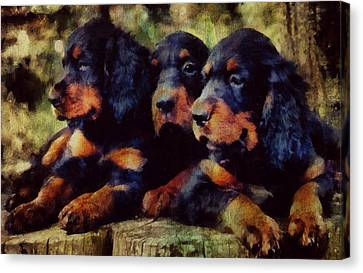 Little Gordons In A Huddle  Canvas Print by Janice MacLellan