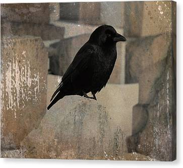 Little Gothic Crow  Canvas Print by Gothicrow Images