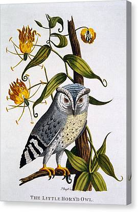 Little Horned Owl, From Indian Zoology Canvas Print