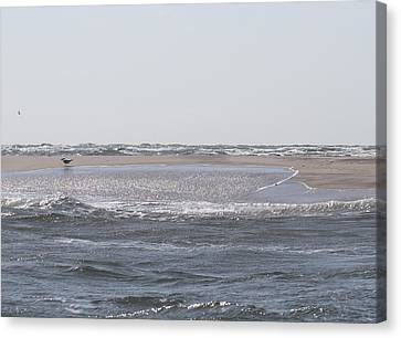 Little Island Near Cape Lookout 4 Canvas Print by Cathy Lindsey