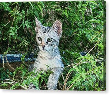 Canvas Print featuring the photograph Little Kitten by Kathy Churchman