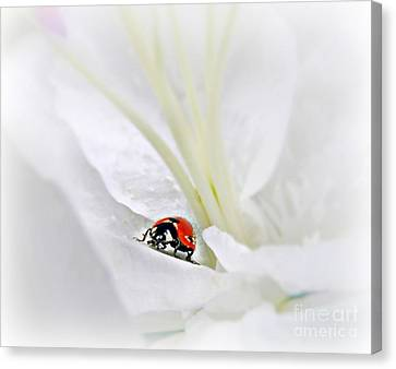 Little Ladybug Canvas Print by Morag Bates