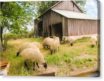 Little Lambs Canvas Print by Mary Timman